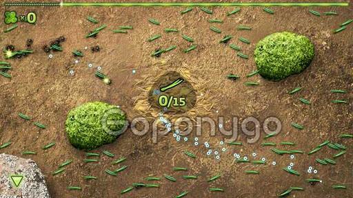 fase hormigas (2)